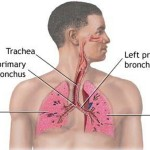 Various Symptoms of Blood Clot in Lung