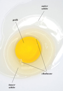 calories in egg whites